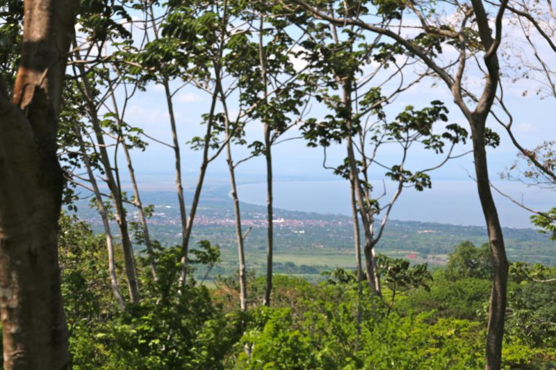 5 acres of coffee, views, monkeys and jungle
